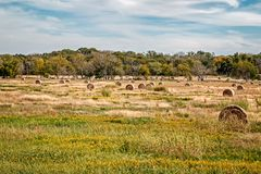 Hay Bales dans un domaine Photo libre de droits
