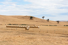 Hay bales on dry Australian farm landscape. Hay bales in dry summer Australian farm landscape with cloudy sky Stock Photos