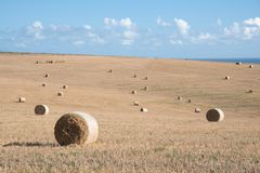 Hay bales in a dry field Royalty Free Stock Images