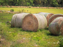 Hay bales dry in hot sun of Florida royalty free stock images