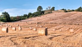Hay bales in early morning Royalty Free Stock Photography