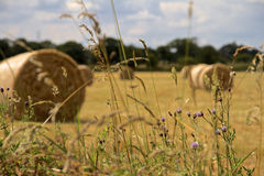 Hay Bales en Angleterre du nord-ouest Images libres de droits
