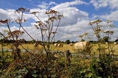 Hay Bales en Angleterre du nord-ouest Image stock