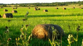 Hay bales. At the end of summer Stock Image