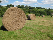 Hay bales in English field 2 Stock Photo