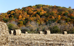 Hay bales and fall color Stock Photos