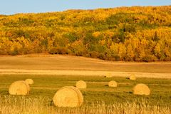 Hay bales in fall Stock Image