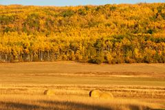 Hay bales in fall Stock Photo