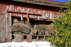 Hay bales falling out of old barn Stock Images
