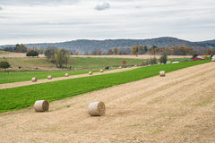 Hay Bales in Farm Field Royalty Free Stock Photo