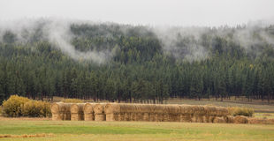 Hay bales in farm land Stock Photo