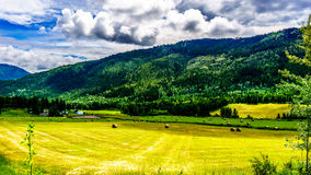 Hay Bales on a Farmers Field in the Shuswap Highlands Royalty Free Stock Photography