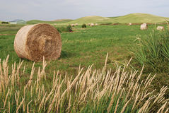 Hay Bales on Farmland Royalty Free Stock Photo