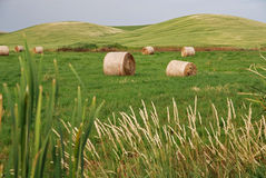 Hay Bales on Farmland Stock Photography