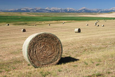 Hay Bales on Farmland Royalty Free Stock Images