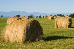 Hay Bales In Field. Bales of hay are nicely rolled up in a field after the grass was cut and dried. The Olympic Mountains are in the background royalty free stock photos