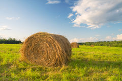 Hay bales in a field Stock Images