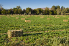 Hay Bales in Field Stock Photos