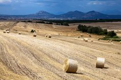 Hay bales on the field Stock Image