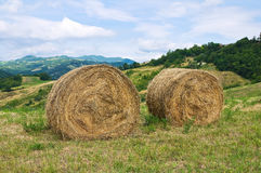 Hay bales field. Royalty Free Stock Images