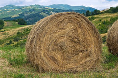 Hay bales field. Stock Photos
