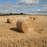 Hay bales in a field Stock Photos