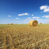 Hay bales in field. Rural field with circular hay bales Stock Photo