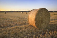 Hay bales. Bales of hay in field royalty free stock photography