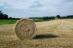 Hay bales. In a field Stock Photos