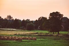 Hay bales in field Stock Photo
