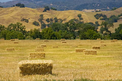Hay bales in a field. Picturesque hay bales dotting a golden field Royalty Free Stock Image