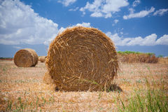 Hay bales on the field Royalty Free Stock Images
