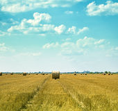 Hay bales on the field Stock Photography