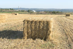 Hay bales in field Royalty Free Stock Photography