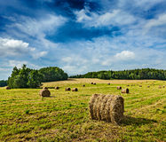 Hay bales on field Royalty Free Stock Images