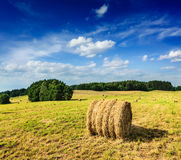 Hay bales on field Royalty Free Stock Photography