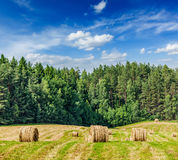 Hay bales on field Stock Photography