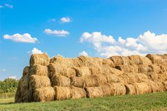 Bales of meadow hay. Hay bales in the field stock images