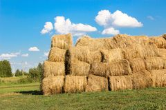 Bales of meadow hay. Hay bales in the field stock image