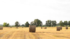 Hay bales in field, bright Royalty Free Stock Photography