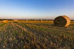 Hay bales on the field Stock Photos