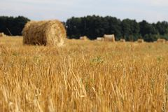 Hay bales. Field with fresh hay bales Royalty Free Stock Photos