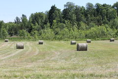 Hay Bales in Field Stock Images