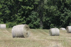 Hay Bales in Field Royalty Free Stock Image
