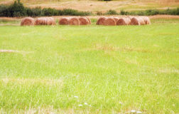 Hay Bales field. Group of round bales of hay in far end of field Royalty Free Stock Image