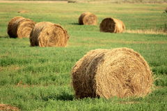 Hay bales on the field Royalty Free Stock Photo