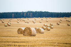 Hay bales on the field Stock Images