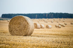 Hay bales. On the field after harvest Stock Image