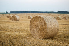 Hay bales on the field Royalty Free Stock Photos