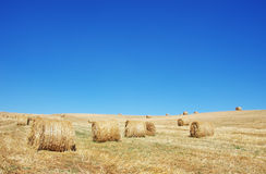 Hay bales in a field Royalty Free Stock Photos